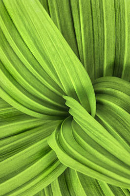 The False Hellebore-abstract Patterns In Nature Art Print by Thomas Schoeller