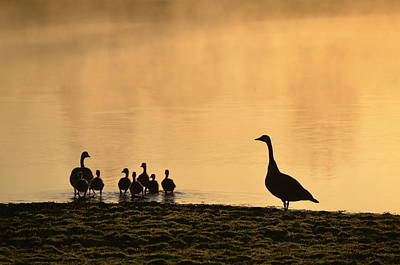 Foggy Lake Digital Art - The Family by Bill Cannon