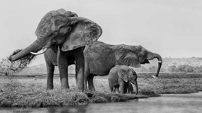 Baby Elephant Wall Art - Photograph - The Family Of Elephants by Phillip Chang