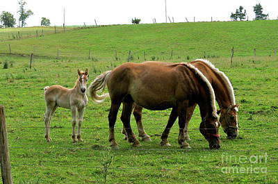 The Family Of Three. Print by Penny Neimiller