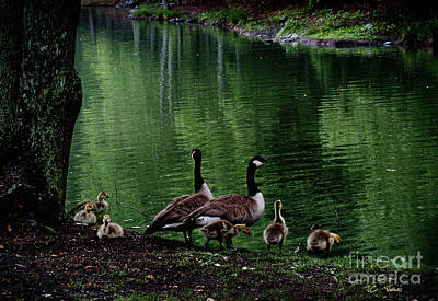 Photograph - The Family Outing by James C Thomas