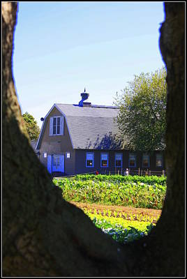The Farmhouse - Through The Maple Tree Original by Dora Sofia Caputo Photographic Art and Design