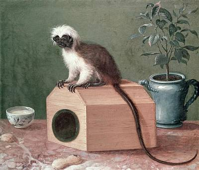 The Favourite Monkey Of Carl Linnaeus 1707-78 Oil On Canvas Art Print by Gustavus Hesselius