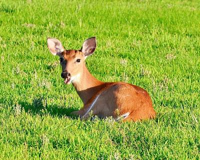 Photograph - The Fawn - Cape Helopen Delaware by Kim Bemis