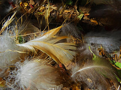 Photograph - The Feathers Of Fall by Jacqueline  DiAnne Wasson