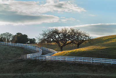 Photograph - The Fence And The Oak Trees by Roger Mullenhour