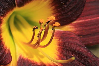 Photograph - Almost Too Close Day Lily Flower Art by Reid Callaway