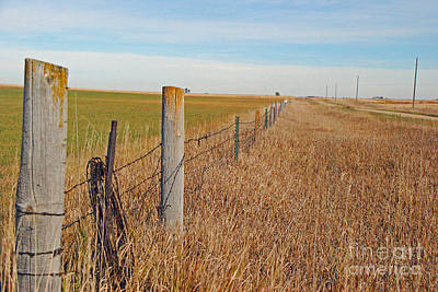 Photograph - The Fence Row by Mary Carol Story