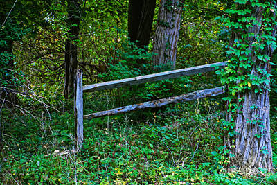 Photograph - The Fence by William Norton
