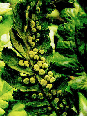 Spores Digital Art - The Fern Apples by Steve Taylor
