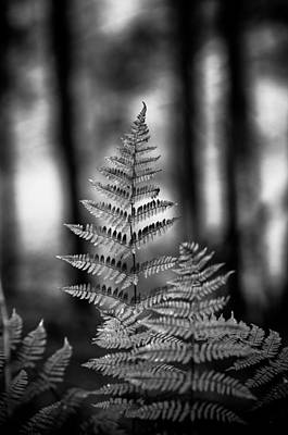 Wall Art - Photograph - The Fern B/w by Scott Hafer