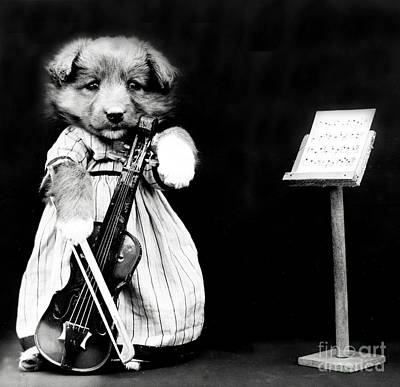 Photograph - The Fiddler 1914 by Science Source