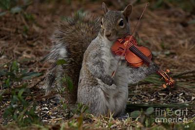 Photograph - The Fiddler by Sandra Clark