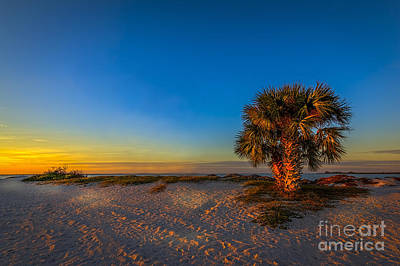 Palmetto Tree Photograph - The Final Moments by Marvin Spates