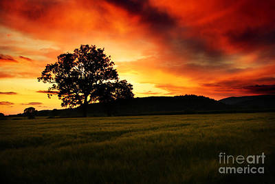 Rural Landscape Photograph - the Fire on the Sky by Angel  Tarantella