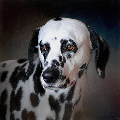 Photograph - The Fireman's Dog - Dalmatian by Jai Johnson