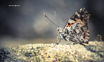 Photograph - The First Butterfly On Mars by Stwayne Keubrick