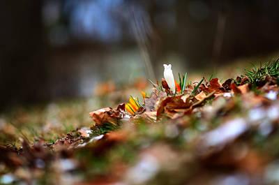 Photograph - The First Flower by Oleksandr Maistrenko