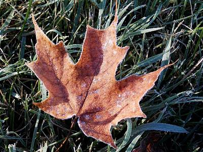 Photograph - The First Frost by Shana Rowe Jackson