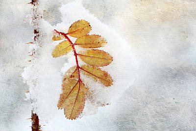 The First Snow Art Print