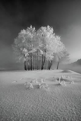 Hoarfrost Wall Art - Photograph - The First Snow by Krzysztof Mierzejewski