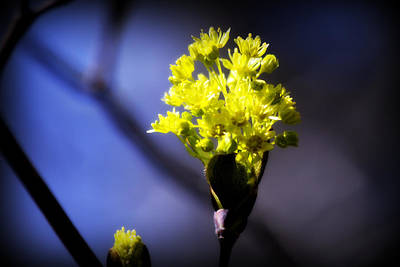 Nature Photograph - The First Stirrings Of Spring Viii by Aurelio Zucco