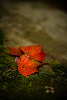 Autumn Leaf Photograph - The First Whispers Of Fall by Shane Holsclaw
