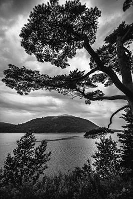 Photograph - The Fjord And The Tree by Robert Clifford