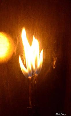 Photograph - The Flame by Maria Urso
