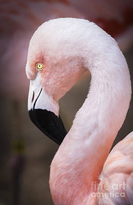 Photograph - The Flamingo Large Canvas Art, Canvas Print, Large Art, Large Wall Decor, Home Decor, Photograph by David Millenheft