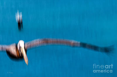 Photograph - The Flapping Wing Span Of The Pelican by Rene Triay Photography
