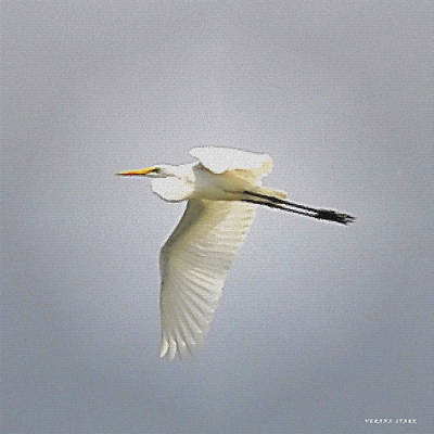 The Flight Of The Great Egret With The Stained Glass Look Art Print by Verana Stark