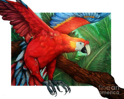 Macaw Drawing - The Flight Of The Macaw by Derrick Bruno-Rathgeber