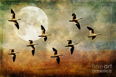 The Flight Of The Snow Geese Art Print
