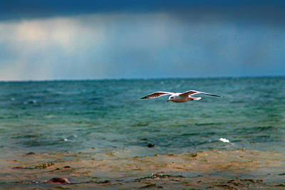 Photograph - The Flight by Rhonda Humphreys