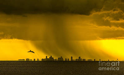 Tampa Skyline Photograph - The Floating City  by Marvin Spates