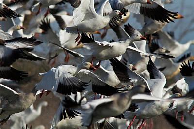 The Flock Art Print by Mircea Costina Photography