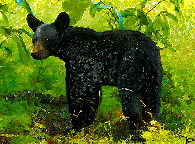 Painting - The Florida Black Bear by David Lee Thompson