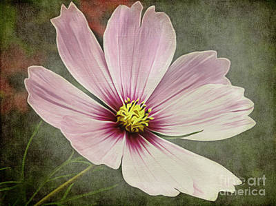 Cosmea Digital Art - The Flower by Angela Doelling AD DESIGN Photo and PhotoArt