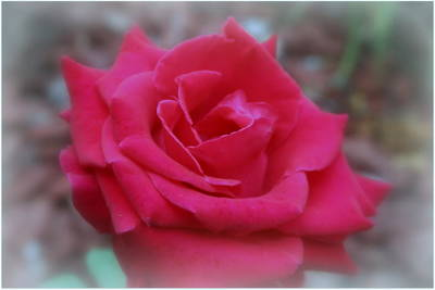 Photograph - The Flower Of Love by Kay Novy