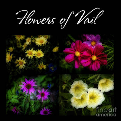 Photograph - The Flowers Of Vail by Jon Burch Photography