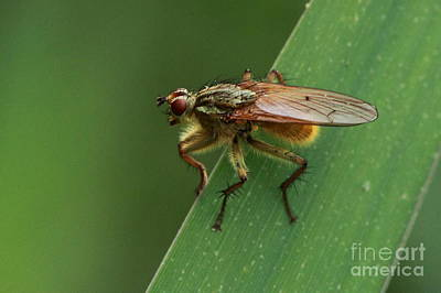 Photograph - The Fly ? by Peter Skelton