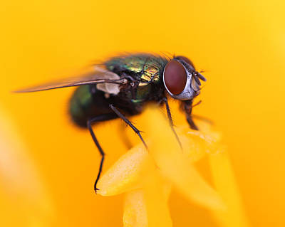 Photograph - The Fly by Bruce  Morrell