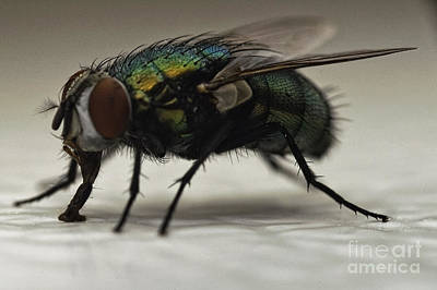 D700 Photograph - The Fly Macro by Michael Ver Sprill