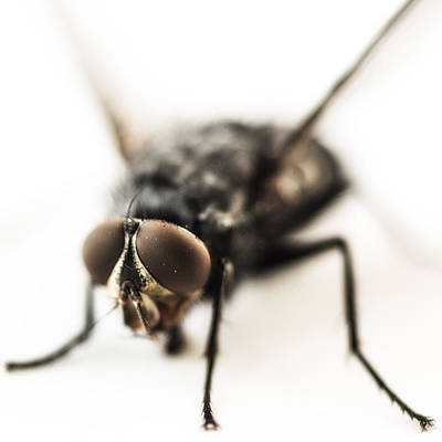 Life Size Photograph - The Fly by Marco Oliveira