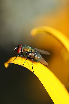 Photograph - The Fly by Trina  Ansel
