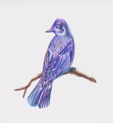 Flycatcher Drawing - The Flycatcher by Hilary Colon