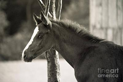 The Foal Art Print by Angel Ciesniarska