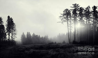 The Fog Original by Martin Slotta