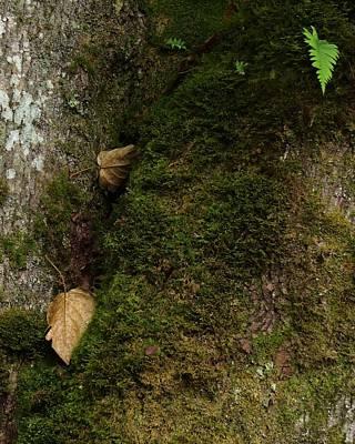 Liquorice Digital Art - The Forest by I'ina Van Lawick